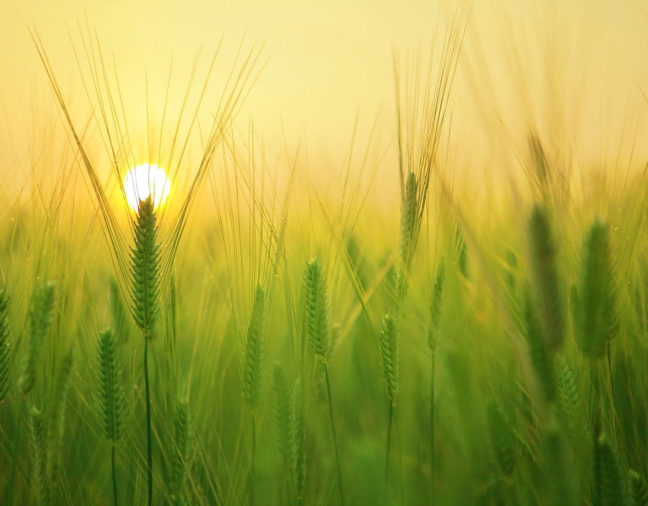 Australain Grain Export Website
